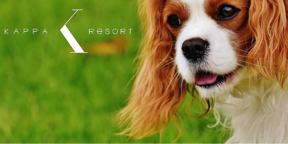 pet friendly hotel in Halkidiki